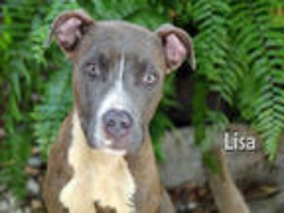 Adopt LISA a Brindle - with White American Pit Bull Terrier / Mixed dog in Fort