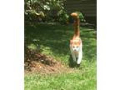 Adopt Jacks a Orange or Red American Shorthair / Mixed cat in Warner Robins
