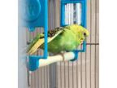 Adopt SNAPPY BIRD a Parakeet (Other)