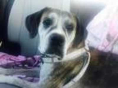 Adopt Trudy MD a Boxer