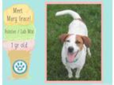 Adopt MaryGrace a Pointer