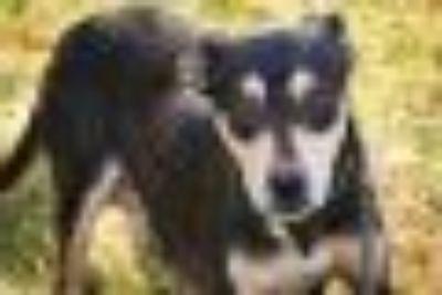 Lana Hound Dog