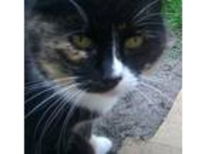 Adopt Rosie (& Mush( [CP] a Calico or Dilute Calico Domestic Shorthair / Mixed
