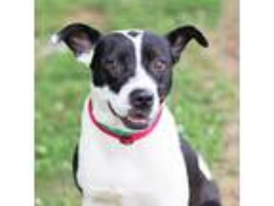 Adopt Kay a Black Labrador Retriever / Mixed dog in Atlanta, GA (25296746)