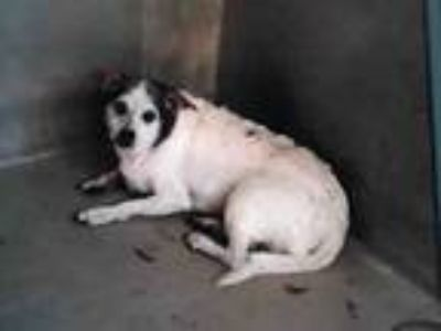 Adopt NEEDS RESCUE a Terrier, Mixed Breed