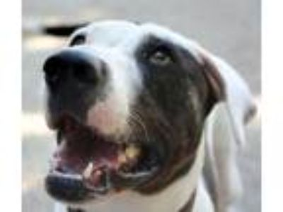 Adopt Kilesse a Pointer