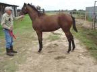 Creative Cause Filly Out of Divine Park Mare