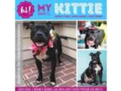 Adopt Kittie a Black American Pit Bull Terrier / Mixed dog in New Port Richey