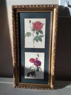 Beautiful framed rose pictures