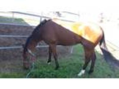 Race Horse For Sale