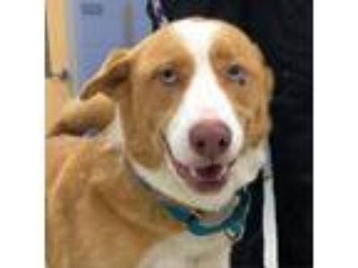 Adopt Max a Red/Golden/Orange/Chestnut Mixed Breed (Medium) dog in Jacksonville