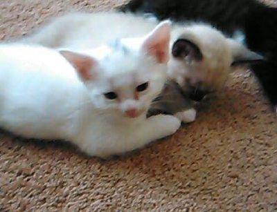 8 Kittens born April 30, 2017