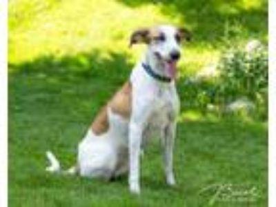 Adopt Lindy D3887 a Hound
