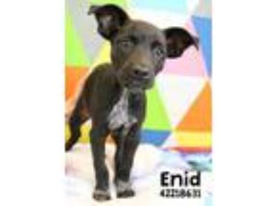 Adopt Enid a Black Retriever (Unknown Type) / Mixed dog in Gulfport