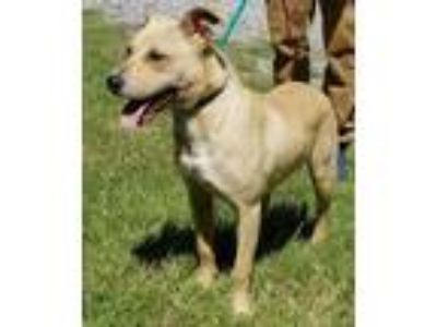 Adopt Nyla a Tan/Yellow/Fawn Mixed Breed (Large) / Mixed dog in Natchez