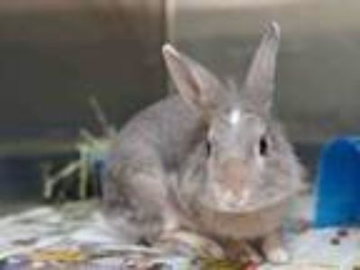 Adopt BRAMBLE a Bunny Rabbit