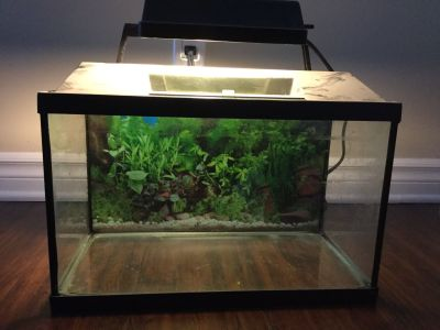 Fish Tank with Lamp