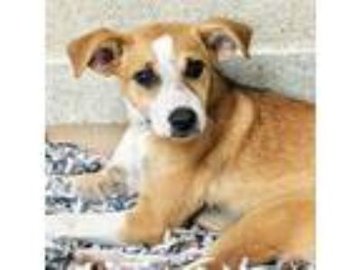 Adopt Kelly a Terrier, Mixed Breed