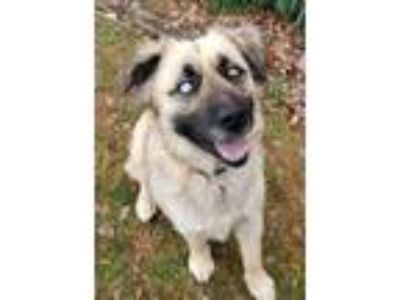 Adopt Zeke*Energetic and ready to play a Husky, Shepherd