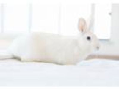 Adopt Frosting a Bunny Rabbit
