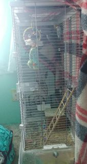 Selling a large bird cage