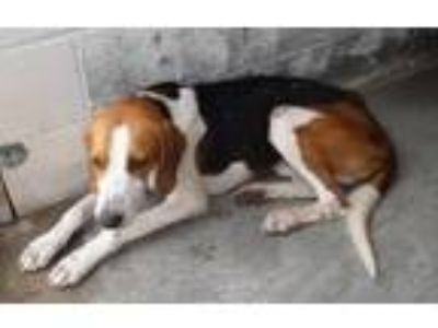 Adopt Jagger a Hound, Mixed Breed