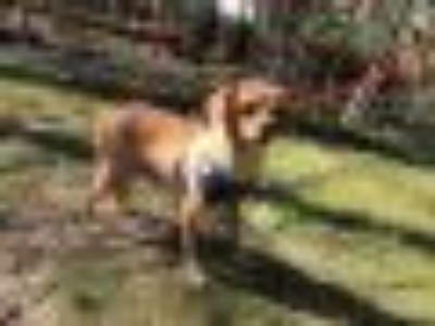 Precious Pugley Pug - Terrier Dog