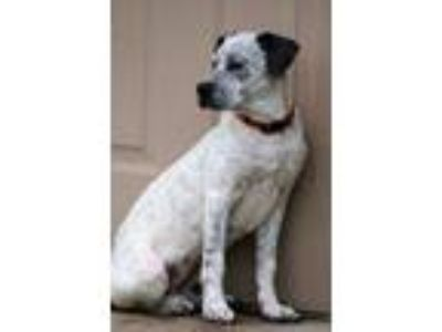 Adopt Delis a Mixed Breed