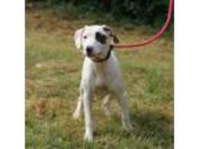 Adopt Vanilla Wafer a Mixed Breed