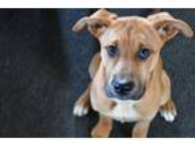 Adopt Savannah a Mixed Breed