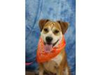 Adopt Frito a Tan/Yellow/Fawn Beagle / Mixed dog in Yucaipa, CA (19527599)