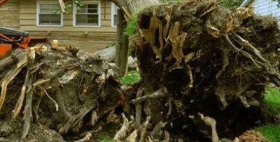 Spartanburg Tree Care