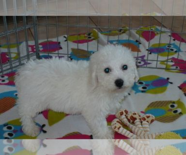 Puppy - Animals and Pets for Adoption Classifieds in Tucson