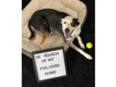 Adopt Camille- No Longer Accepting Applications a Tricolor (Tan/Brown & Black &