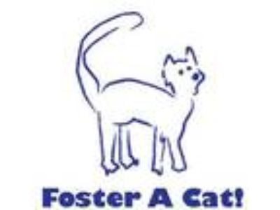 Adopt Foster a Cat! a Domestic Long Hair, Domestic Short Hair