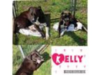 Adopt Kelly a Black - with White Labrador Retriever / Mixed dog in North Granby