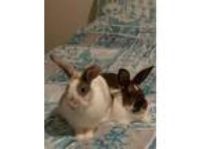 Adopt Tiny and Whitney a Bunny Rabbit