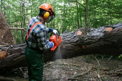 Gibbs Tree Service Offers Appropriate tree trimming and removal