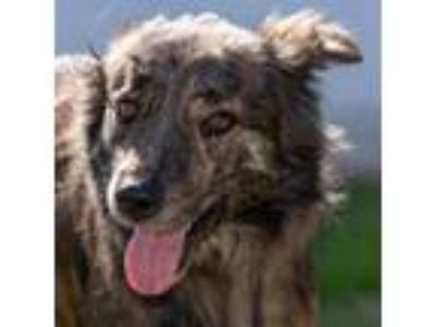 Adopt Stitch 19-01-001 a Dutch Shepherd