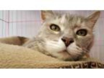 Adopt Earleen a Domestic Short Hair