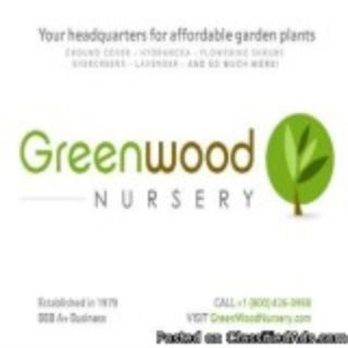 Wholesale Plants for Large Plants For Landscapers