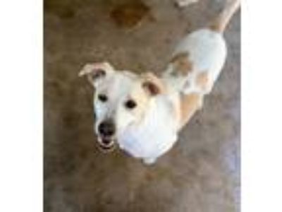 Adopt Prince William a Terrier