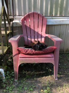 Red Adirondack chairs. Have 2 available. Great project pieces as they are faded. One has a crack in arm.