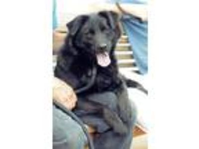 Adopt Raggedy Eli a Black Spitz (Unknown Type, Medium) / Mixed dog in Marietta