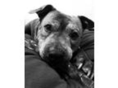 Adopt Beatrice a Mixed Breed, Terrier