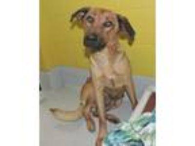 Adopt Essy a German Shepherd Dog