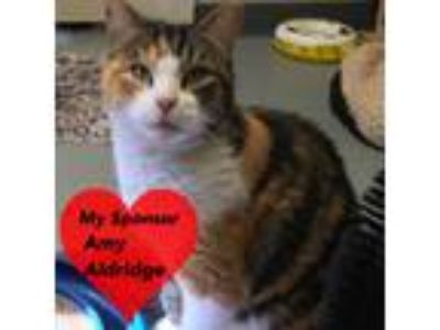 Adopt June Bug a Calico or Dilute Calico Calico (short coat) cat in San Leon