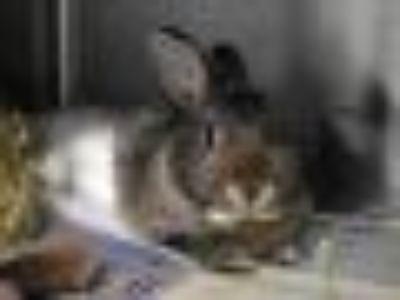 BUGSY Bunny Rabbit Rabbit
