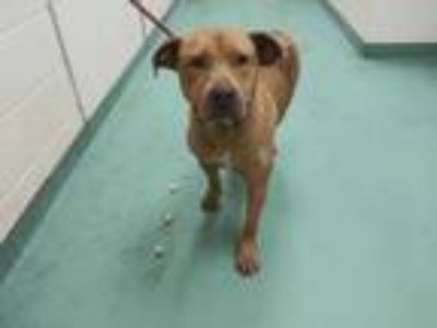 Adopt ROBYN a Brown/Chocolate Mixed Breed (Medium) / Mixed dog in Memphis