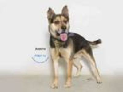 Adopt RYLAND a German Shepherd Dog